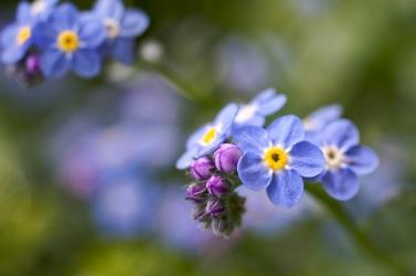 O papel dos pais é o mesmo do jardineiro, que sabe das necessidades de cada flor, incentiva ou poda na hora certa.
